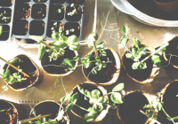 Let's Make a Difference: Start an Eco-friendly Website